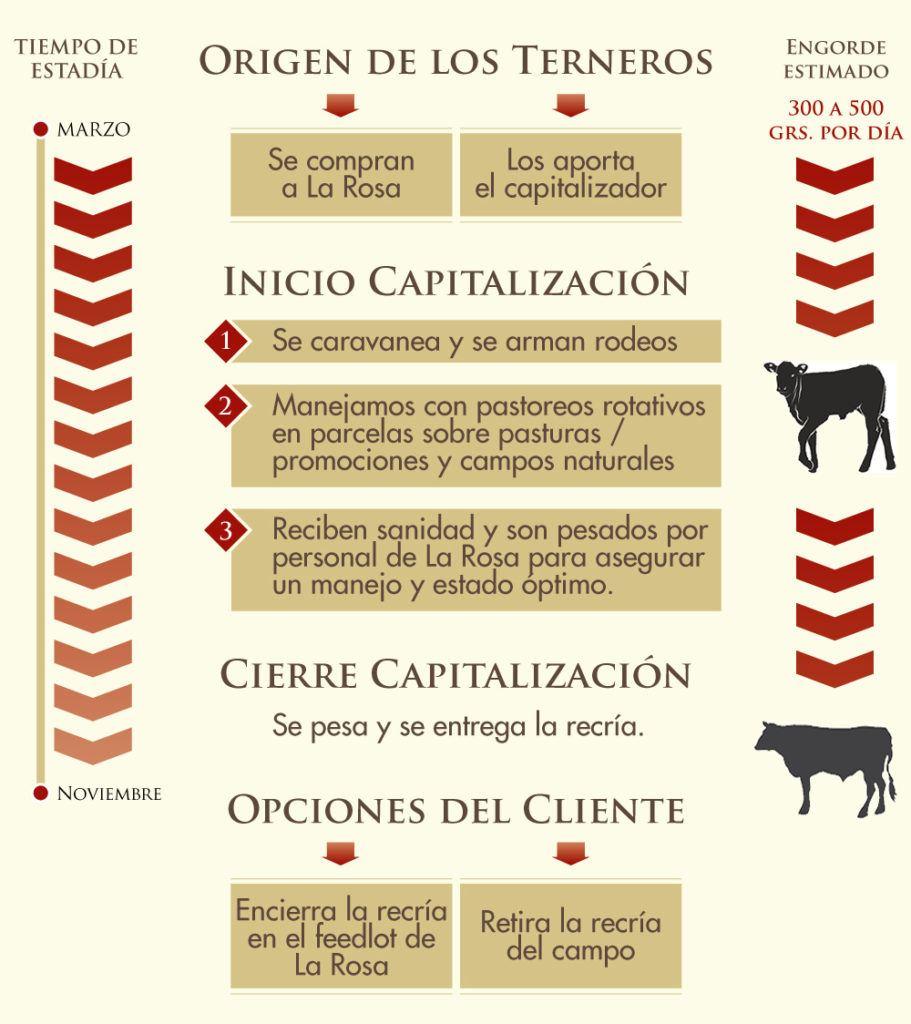 sistema de capitalizacion